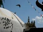 Nepal, Central Region, Bagmati Zone, Kathmandu, Swayambhunath: Pigeons at the Stupa