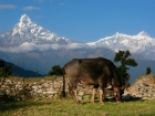 Exhibition 'Nepal' in the Theaterhaus Stuttgart 2019 - Landscapes