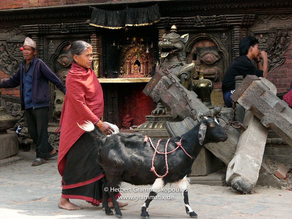 Nepal, Central Region, Bagmati Zone, Bhaktapur District, Bhaktapur, Taumadhi Square: An old woman with her goat at the broken construction of the bell in front of Bhairabnath temple