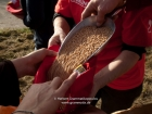Germany, Stuttgart-Moehringen: Distributing wheat to the friends of the biolocical working Reyerhof at their religious ceremony sowing the old traditional winter- wheat kind 'Viva' on their field. App. 500 corns per sqm, 100 kg per hectar is needed