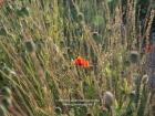 Germany, Baden-Wuerttemberg, Stuttgart-Moehringen: The herbs garden of the organic farming Reyerhof;