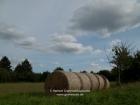 Germany, Baden-Wuerttemberg, Stuttgart: Field after the harvesting of the old wheat kind 'Viva' of the organic farm Reyerhof, making dough (batter)