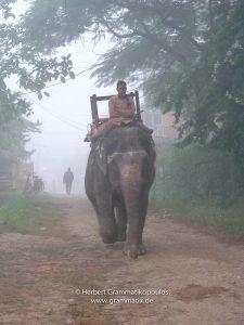 Nepal, Sauraha: Elephant auf den Weg Touristen einzusammeln im Morgennebel
