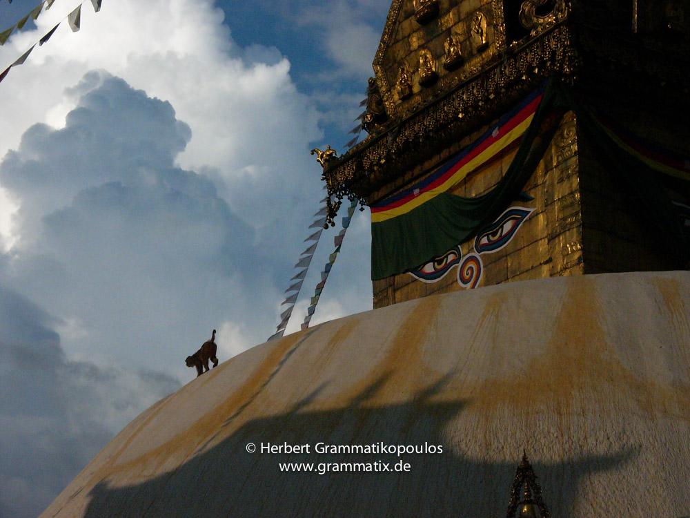 Nepal, Central Region, Bagmati Zone, Kathmandu, Swayambhou: A monkey on the great stupa