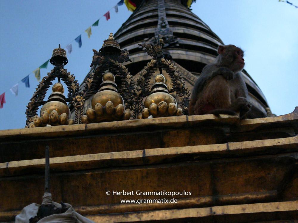 Nepal, Central Region, Bagmati Zone, Kathmandu, Swayambhou: A monkey in a niche of the great stupa