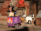 Nepal, Central Region, Bagmati Zone, Lalitpur, Patan, Durbar Square: A icecream seller waits for customers in front of the Durbar palace opposite the Chysin Deval