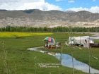 Tibet, Lhatse-Shigatse: Nomads at the highway